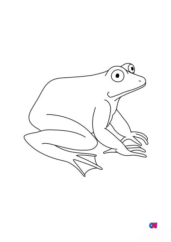 Coloriages d'animaux - Une grenouille 2