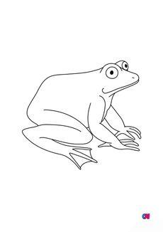 Coloriage Une grenouille 2