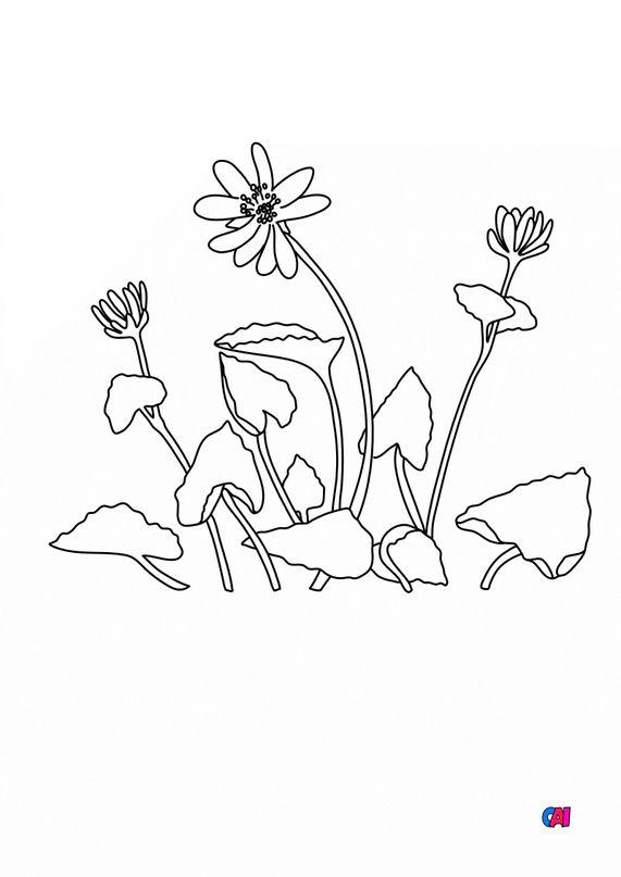 Coloriage de fleurs - Ficaire
