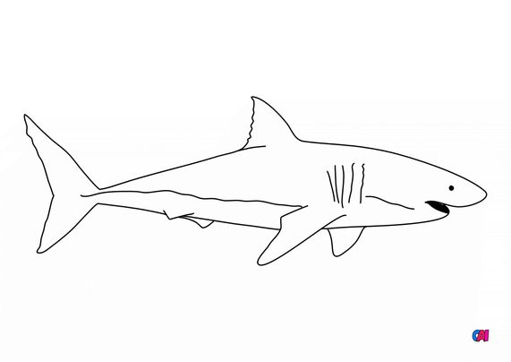 Coloriages d'animaux - Un requin