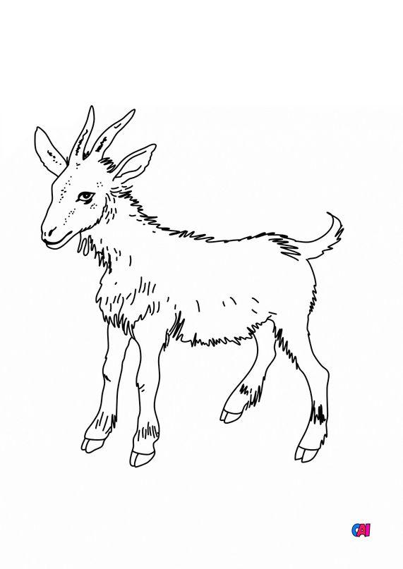 Coloriages d'animaux - Une chèvre