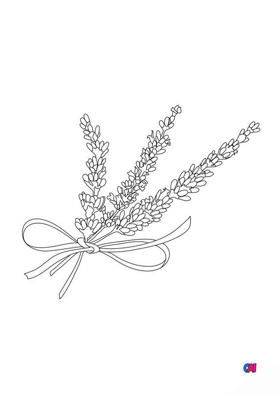 Coloriage de fleurs - lavande 2