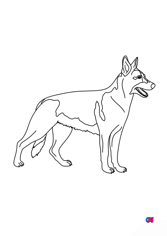 Coloriages d'animaux - Berger Allemand