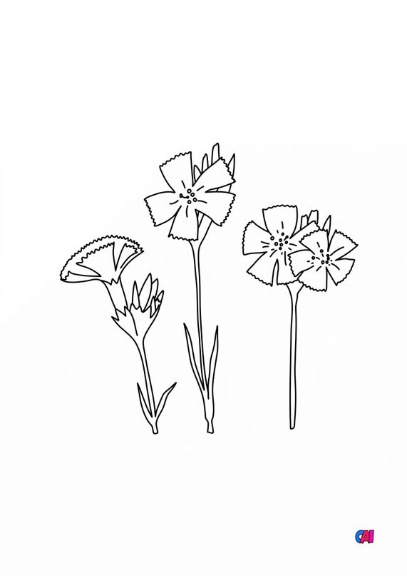 Coloriage de fleurs - Oeillets