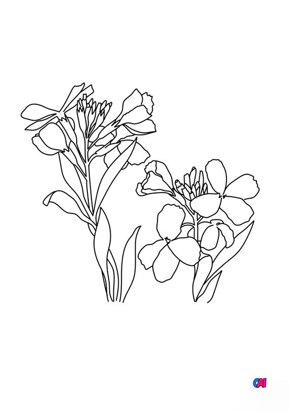 Coloriage de fleurs - Giroflée
