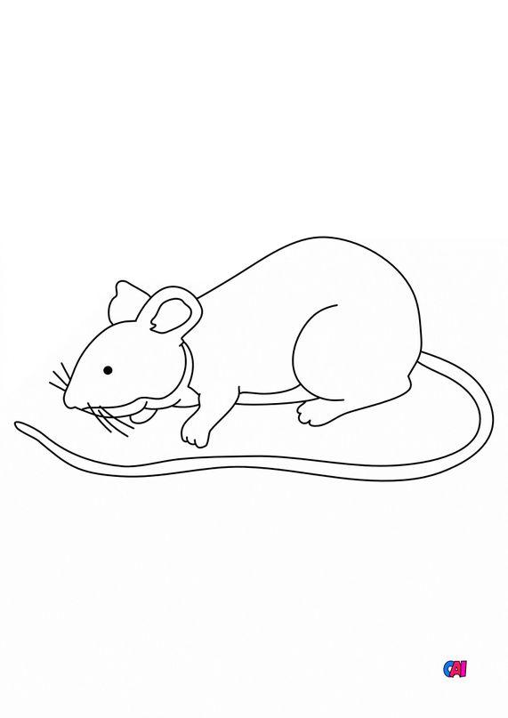 Coloriages d'animaux - une souris