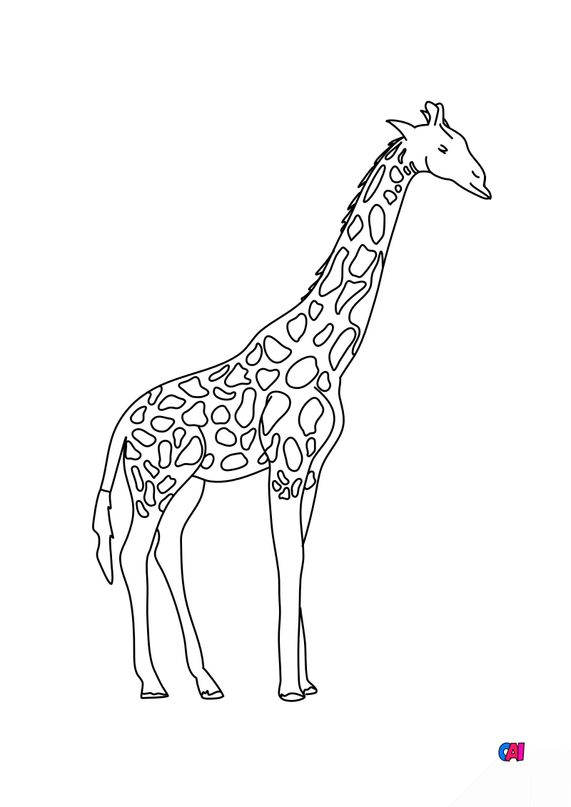 Coloriages d'animaux - Girafe
