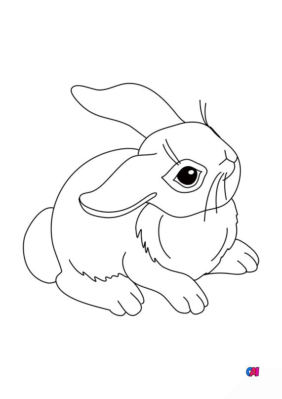 Coloriages d'animaux - Lapin attentif