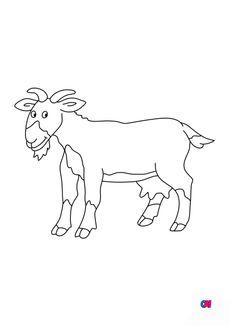 Coloriage Une chèvre