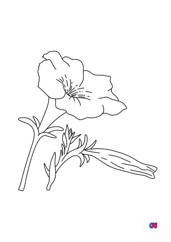 Coloriage de fleurs - Pétunia