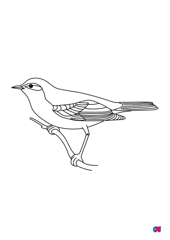 Coloriage d'oiseau - Hypolaïs polyglotte