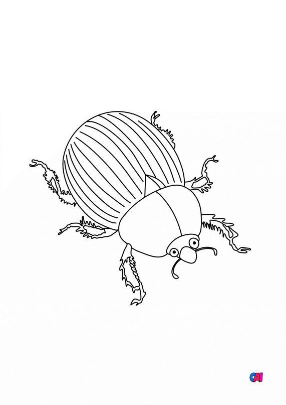 Coloriages d'animaux - Un scarabée