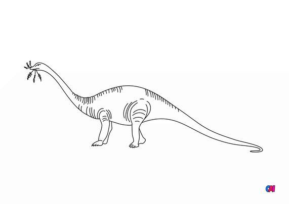 Coloriage de dinosaures - Diplodocus 2