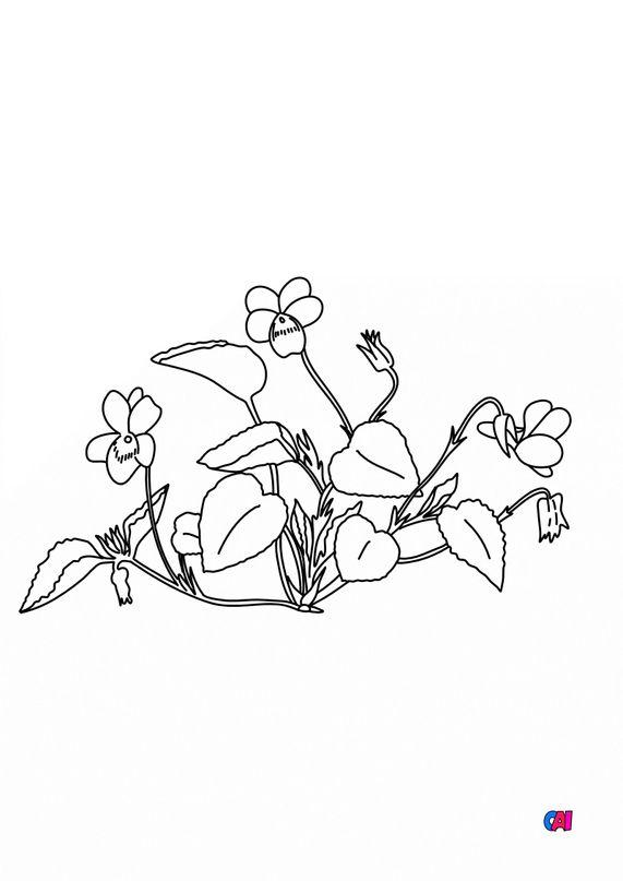 Coloriage de fleurs - Violette