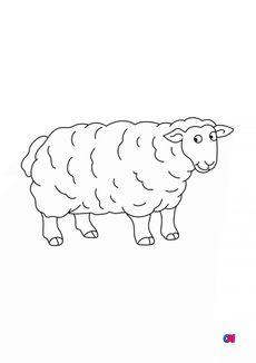 Coloriage Un mouton