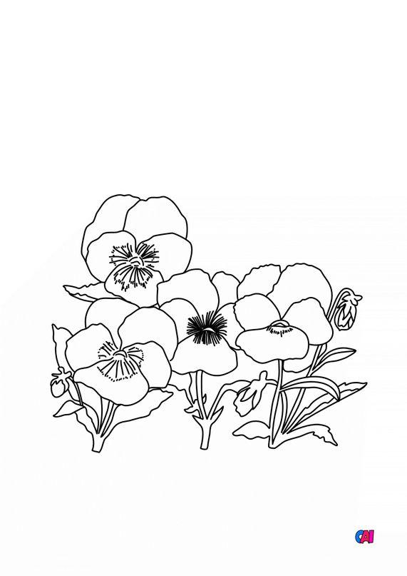 Coloriage de fleurs - Un bouquet de Pensée