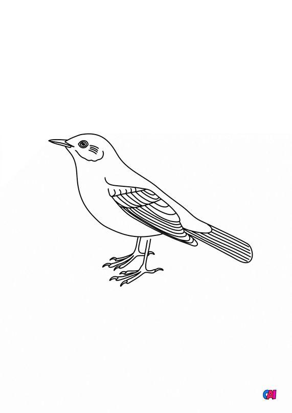 Coloriage d'oiseau - Merle noir