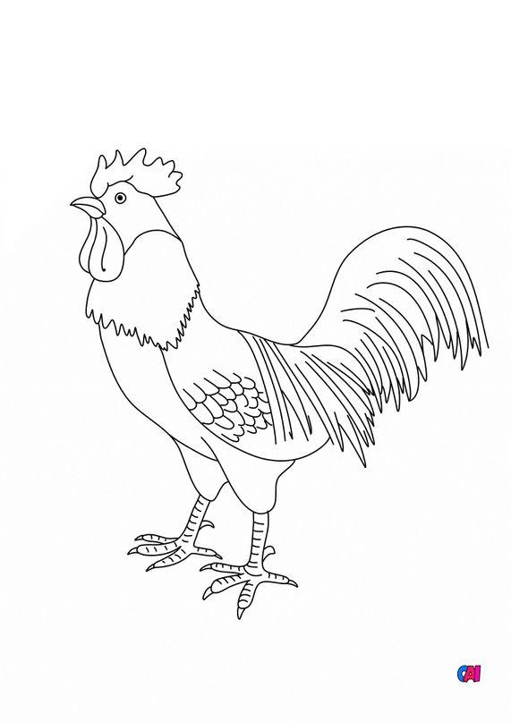 Coloriages d'animaux - Un coq