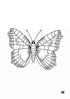 Coloriage Un papillon 3