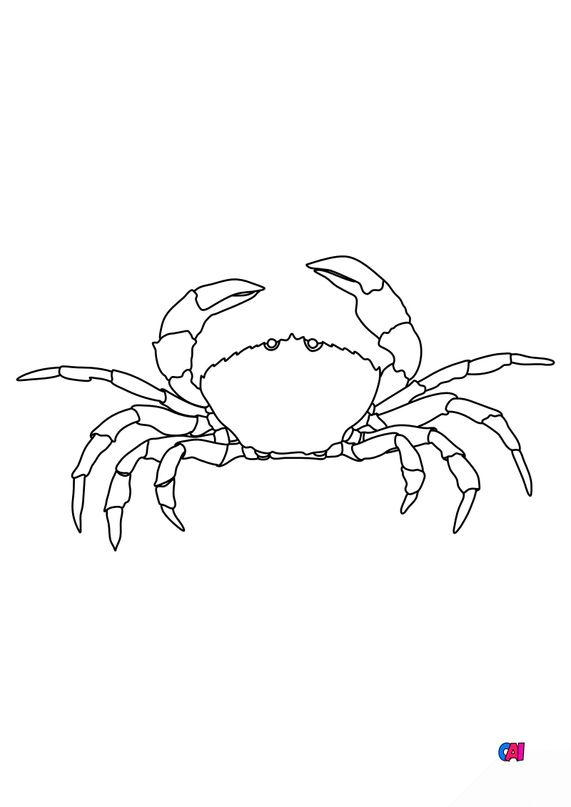 Coloriages d'animaux - Un crabe
