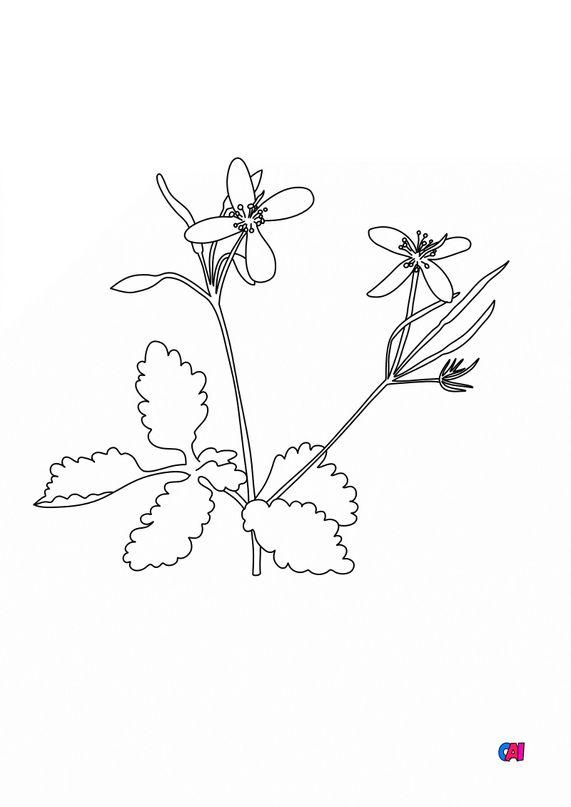 Coloriage de fleurs - Grande Éclaire