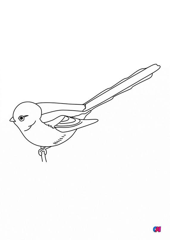 Coloriage d'oiseau - Les oiseaux - Mésange à longue queue
