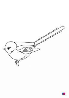 Coloriage Les oiseaux - Mésange à longue queue