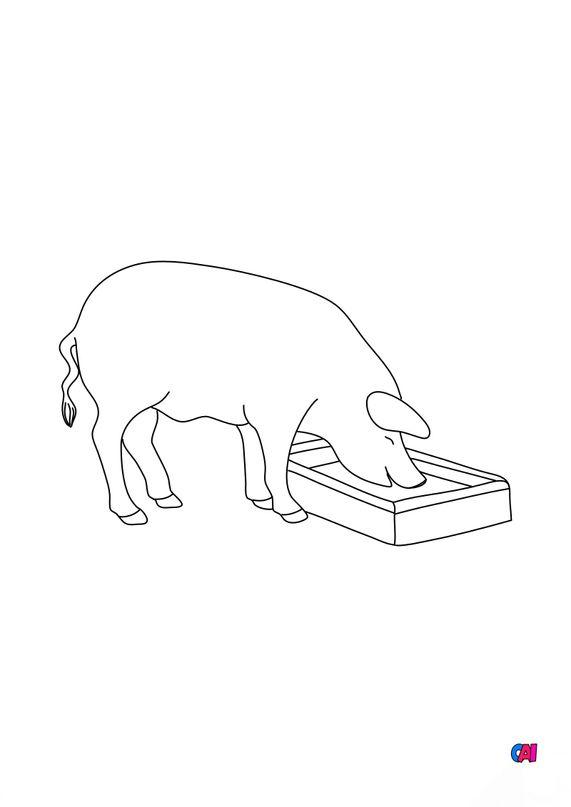 Coloriages d'animaux - Porc et son auge