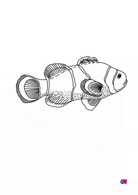 Coloriages d'animaux - poisson des mers