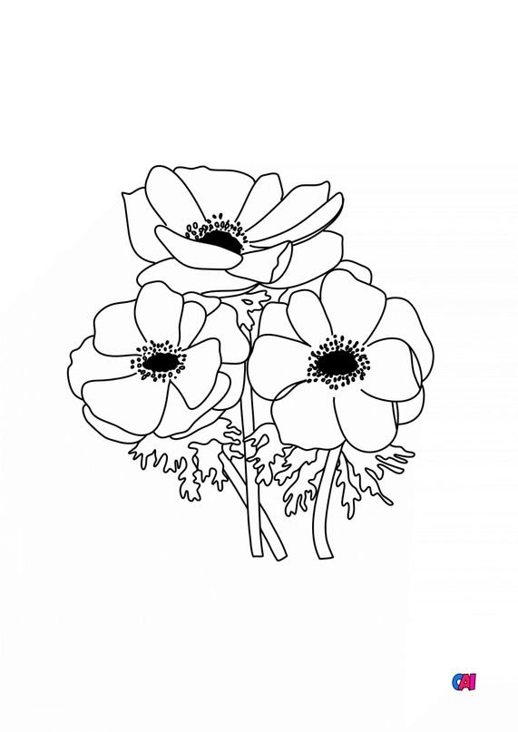 Coloriage de fleurs - Anémone