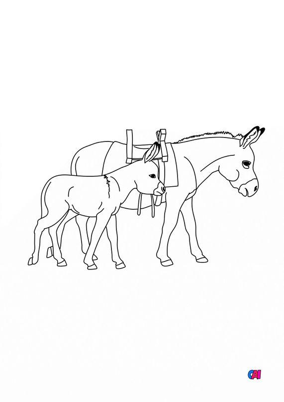 Coloriages d'animaux - Un âne et un ânon