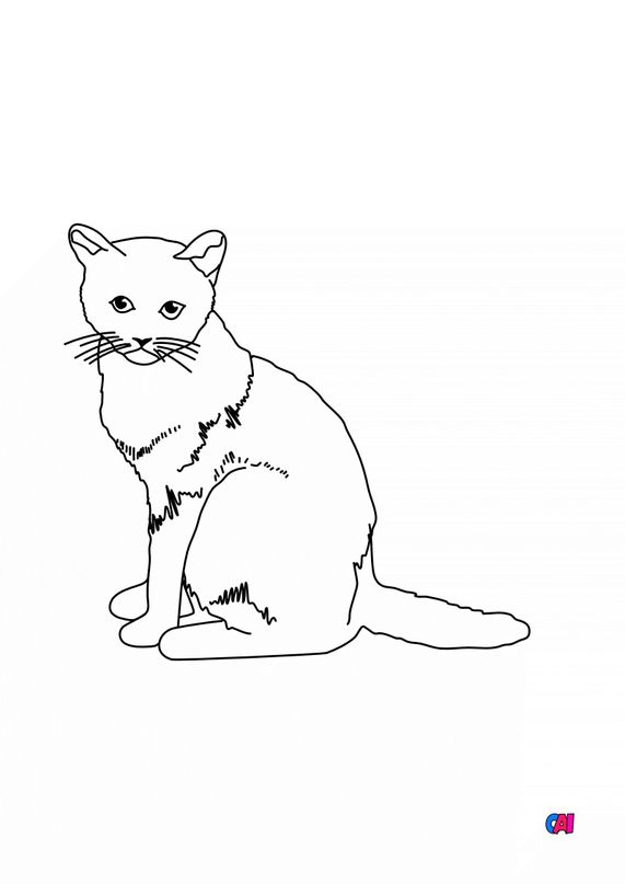 Coloriages d'animaux - Un chat