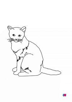 Coloriage Un chat