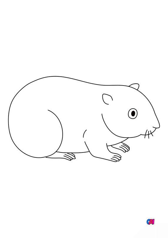 Coloriages d'animaux - Un hamster