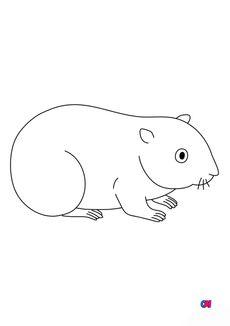 Coloriage Un hamster