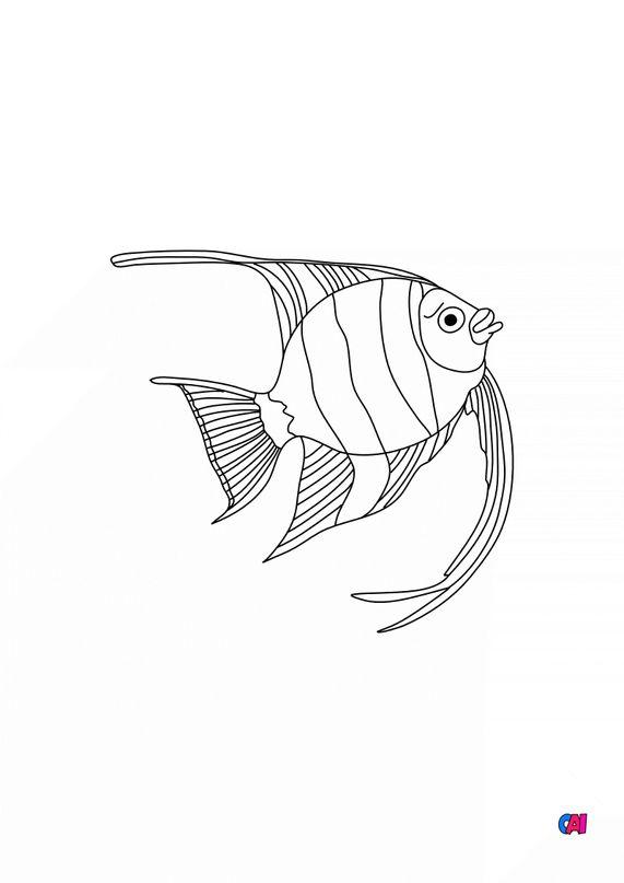 Coloriages d'animaux - Poisson Scalaire