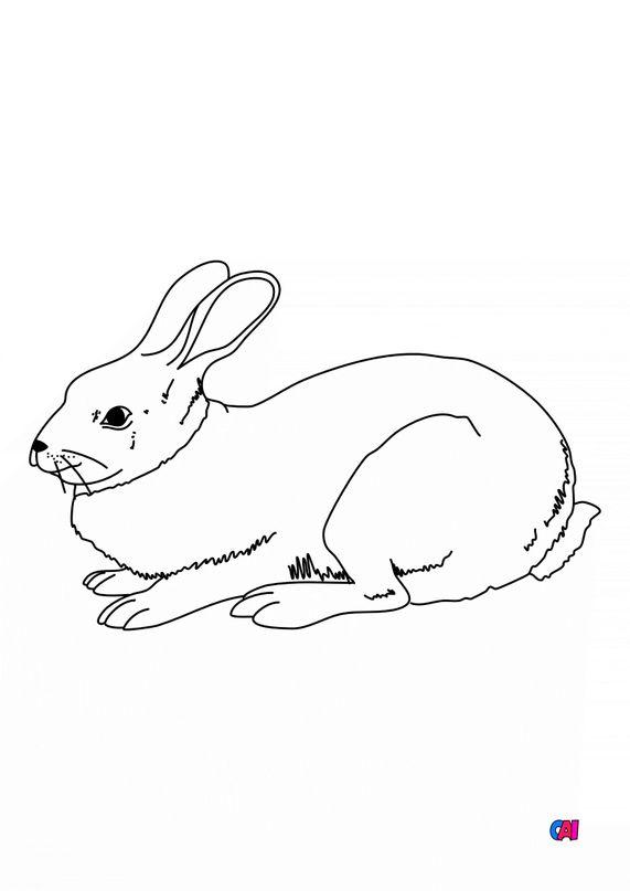 Coloriages d'animaux - Un lapin