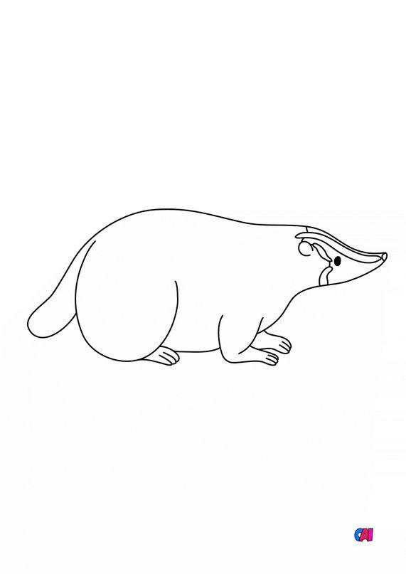 Coloriages d'animaux - Un blaireau