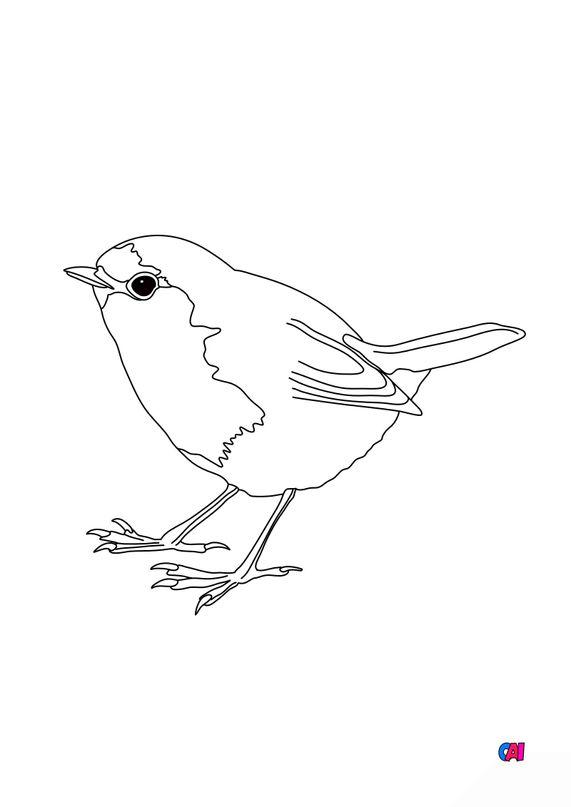 Coloriage d'oiseau - Rouge gorge