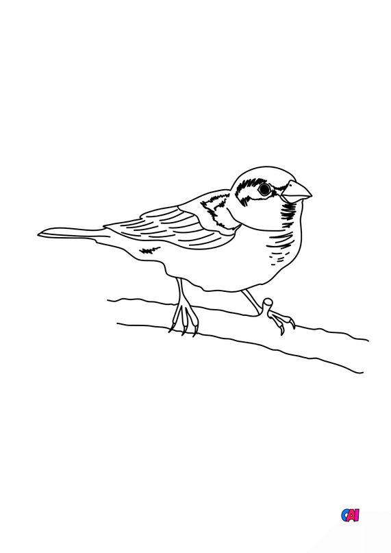 Coloriage d'oiseau - Un petit moineau