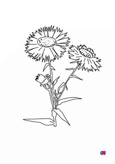 Coloriage Aster