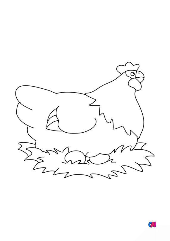 Coloriages d'animaux - La poule
