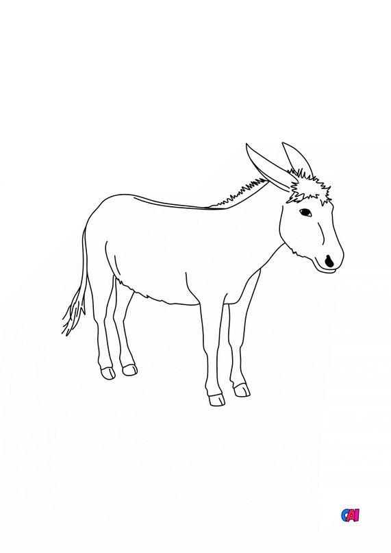 Coloriages d'animaux - Âne 2