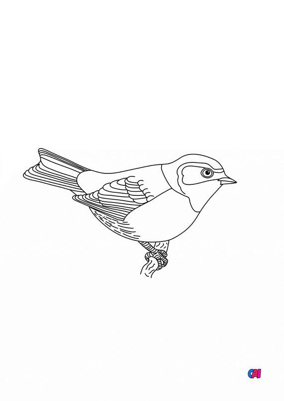 Coloriage d'oiseau - Mésange rémiz