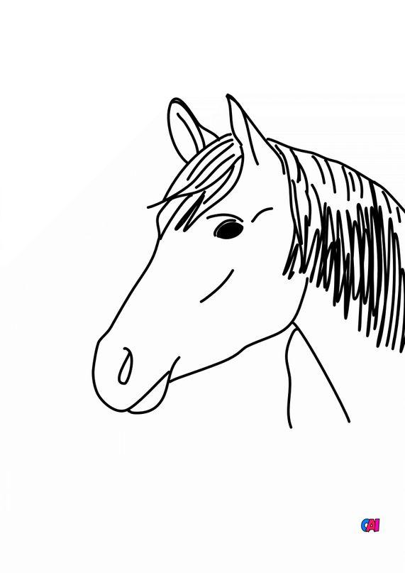 Coloriage de chevaux - Cheval de face