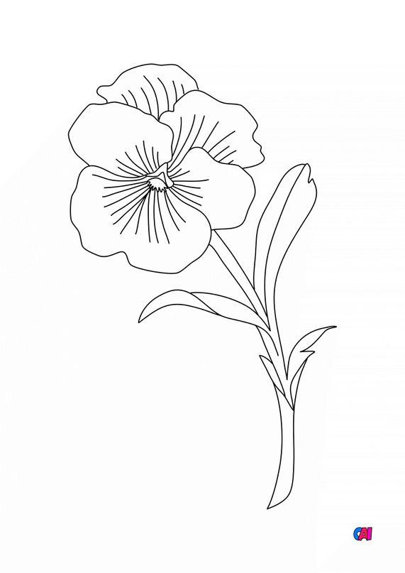 Coloriage de fleurs - Pensée
