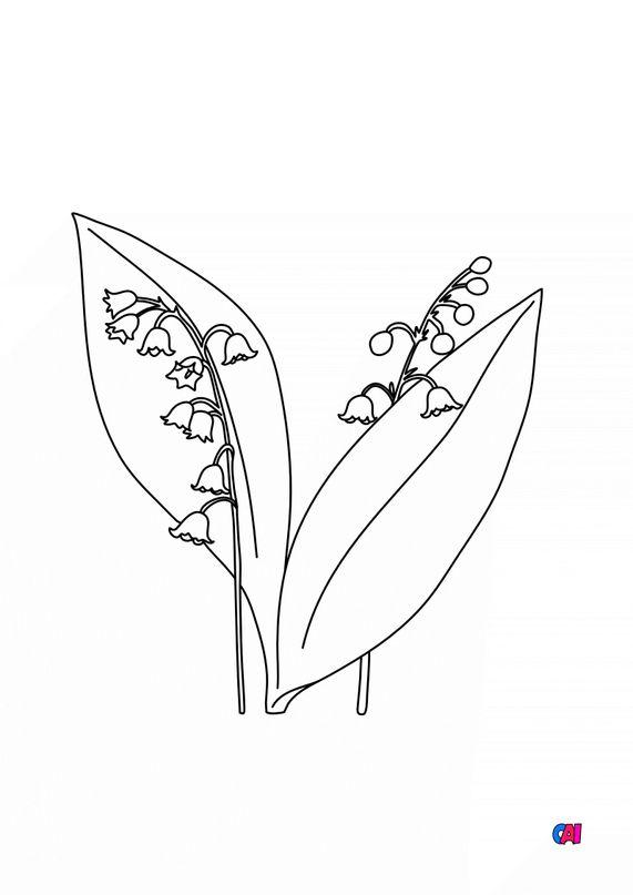Coloriage de fleurs - Muguet