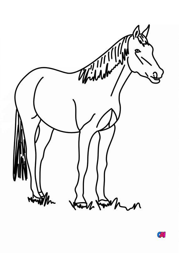 Coloriage de chevaux - Cheval à l'arrêt