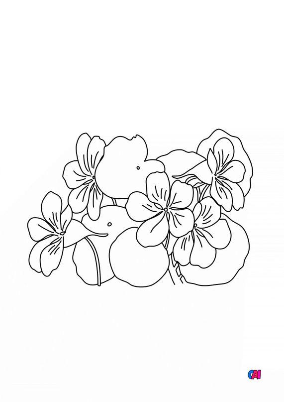 Coloriage de fleurs - Capucine