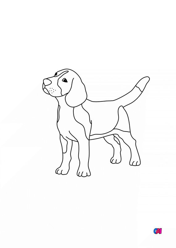 Coloriages d'animaux - chien à colorier